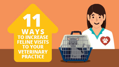ways to increase feline visits to your veterinary practice
